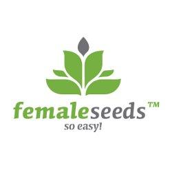 Female_Seeds_-_Auto_AK